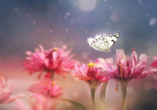Σουρεαλιστικές macro φωτογραφίες εντόμων (2)