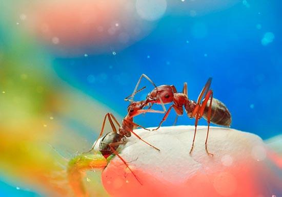 Σουρεαλιστικές macro φωτογραφίες εντόμων (3)