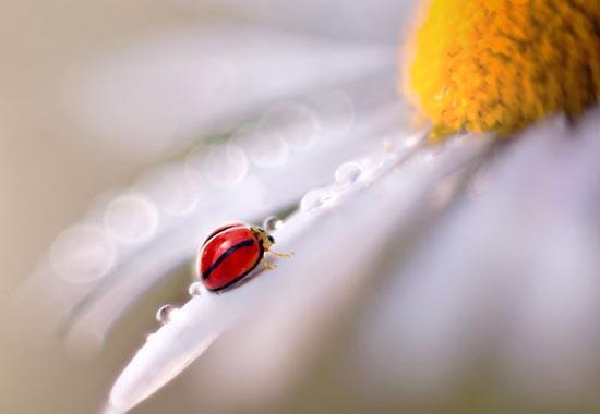 Σουρεαλιστικές macro φωτογραφίες εντόμων (5)