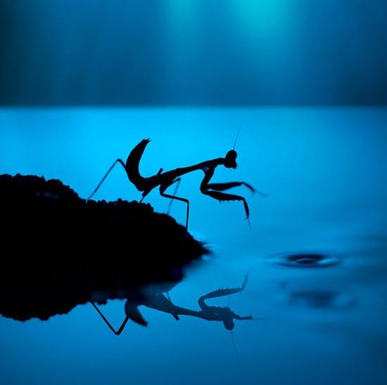 Σουρεαλιστικές macro φωτογραφίες εντόμων (6)
