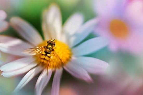 Σουρεαλιστικές macro φωτογραφίες εντόμων (7)
