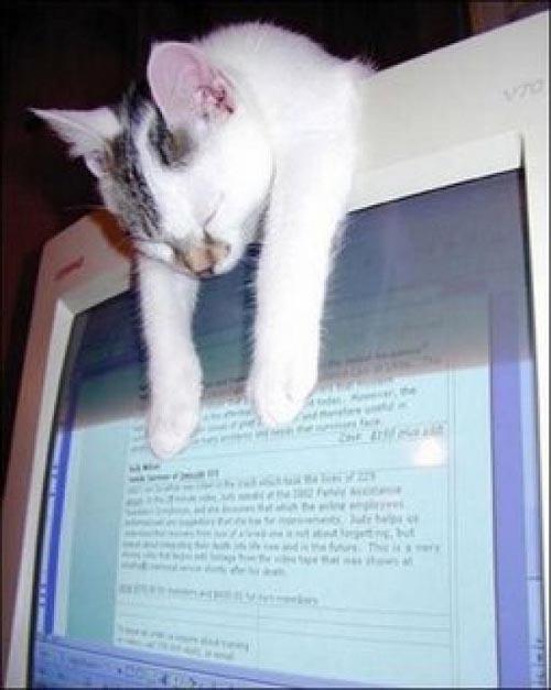 Οι πιο παράξενες στάσεις ύπνου για γάτες (1)