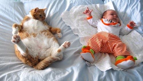 Οι πιο παράξενες στάσεις ύπνου για γάτες (2)