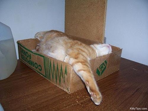 Οι πιο παράξενες στάσεις ύπνου για γάτες (5)