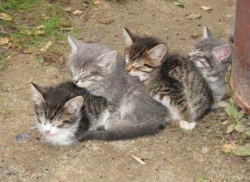 Οι πιο παράξενες στάσεις ύπνου για γάτες (13)