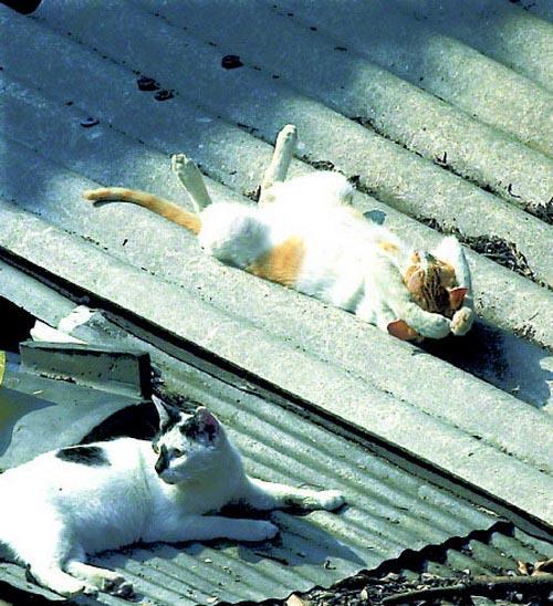 Οι πιο παράξενες στάσεις ύπνου για γάτες (23)