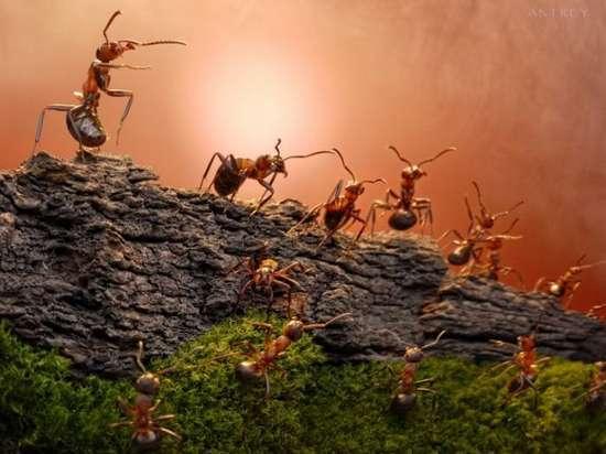Περιπέτειες μυρμηγκιών (2)