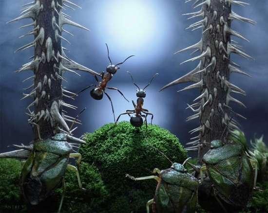 Περιπέτειες μυρμηγκιών (3)