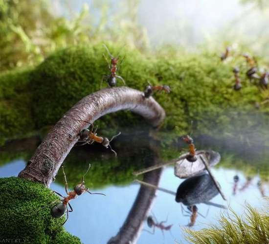 Περιπέτειες μυρμηγκιών (4)