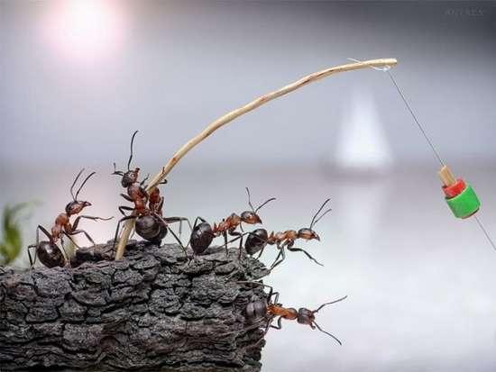Περιπέτειες μυρμηγκιών (5)