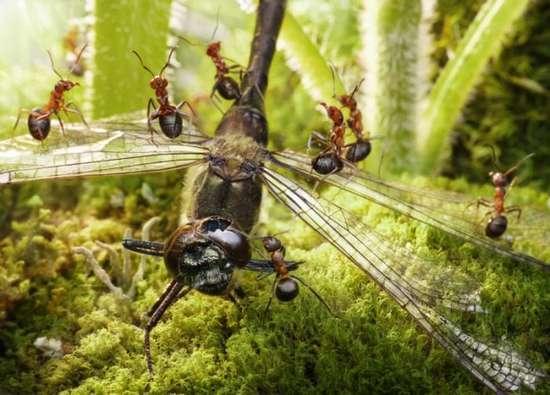 Περιπέτειες μυρμηγκιών (7)