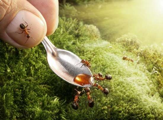 Περιπέτειες μυρμηγκιών (8)