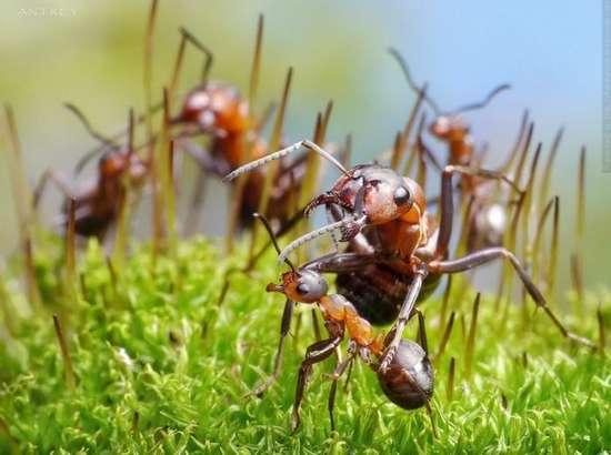 Περιπέτειες μυρμηγκιών (9)