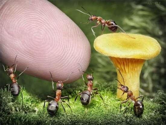 Περιπέτειες μυρμηγκιών (10)