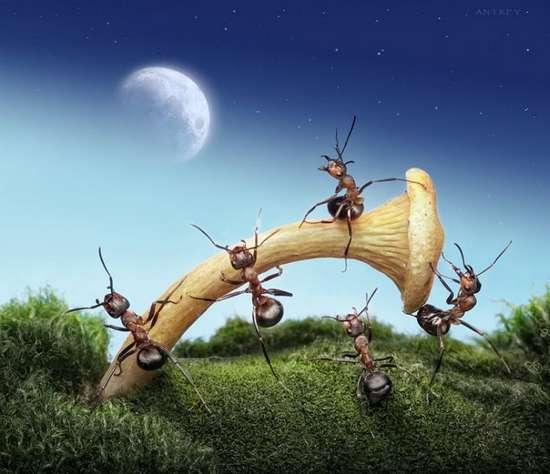 Περιπέτειες μυρμηγκιών (12)