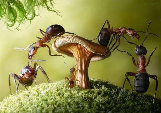 Περιπέτειες μυρμηγκιών (13)