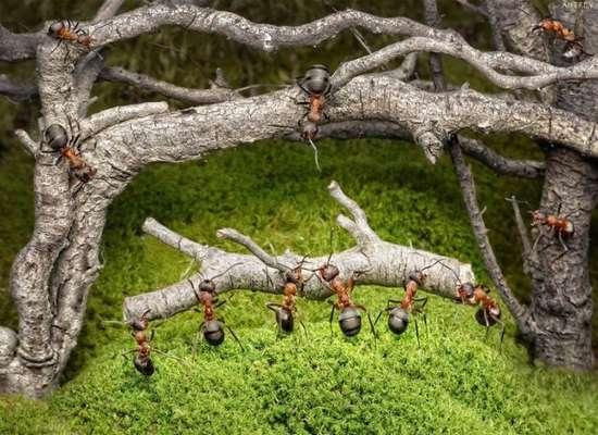 Περιπέτειες μυρμηγκιών (14)