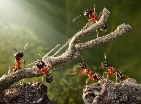 Περιπέτειες μυρμηγκιών (15)