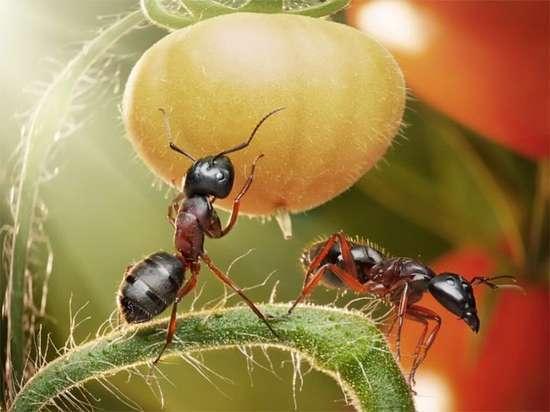 Περιπέτειες μυρμηγκιών (16)