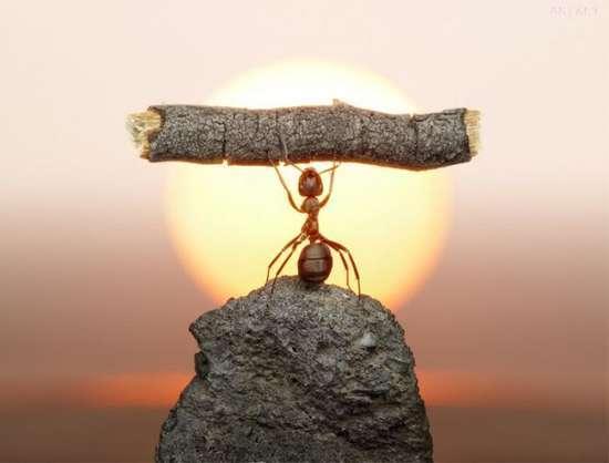 Περιπέτειες μυρμηγκιών (18)