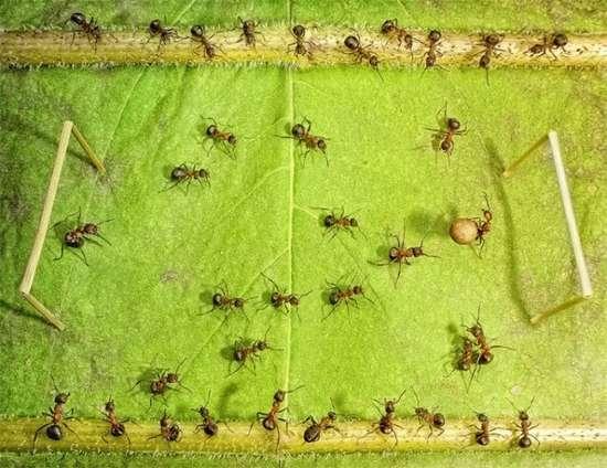 Περιπέτειες μυρμηγκιών (19)