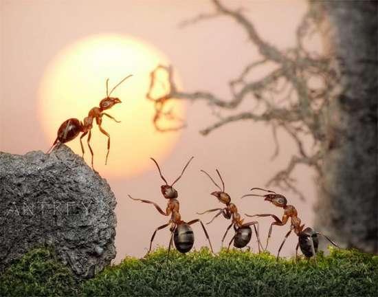 Περιπέτειες μυρμηγκιών (20)