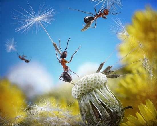 Περιπέτειες μυρμηγκιών (21)