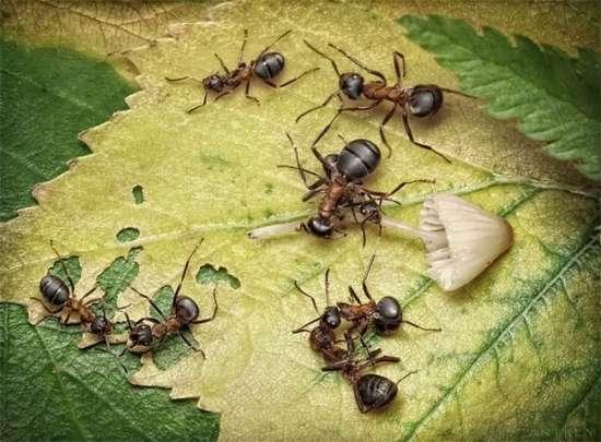 Περιπέτειες μυρμηγκιών (24)