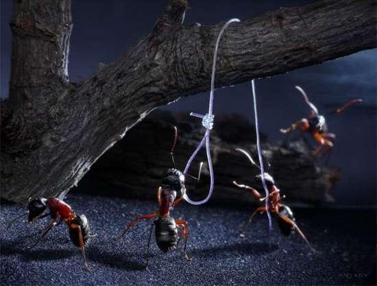 Περιπέτειες μυρμηγκιών (25)
