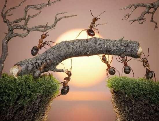 Περιπέτειες μυρμηγκιών (26)