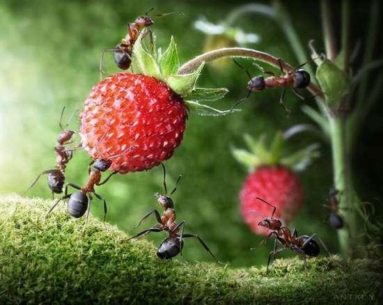 Περιπέτειες μυρμηγκιών (27)
