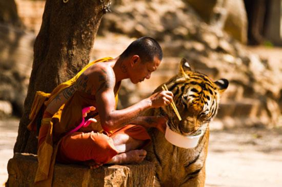 Φωτογραφία της ημέρας: Μοναχός και τίγρης