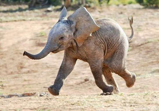 Τα πιο χαρούμενα ζώα στον κόσμο (1)