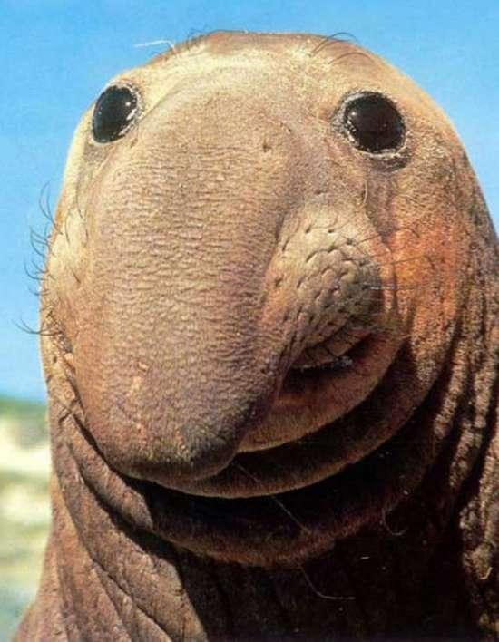 Τα πιο χαρούμενα ζώα στον κόσμο (4)