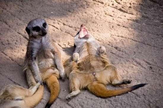 Τα πιο χαρούμενα ζώα στον κόσμο (6)