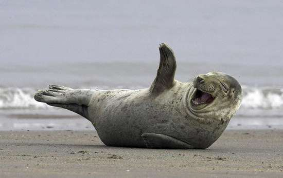 Τα πιο χαρούμενα ζώα στον κόσμο (11)