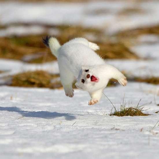 Τα πιο χαρούμενα ζώα στον κόσμο (13)