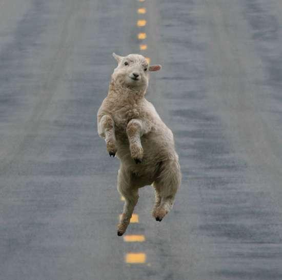 Τα πιο χαρούμενα ζώα στον κόσμο (17)