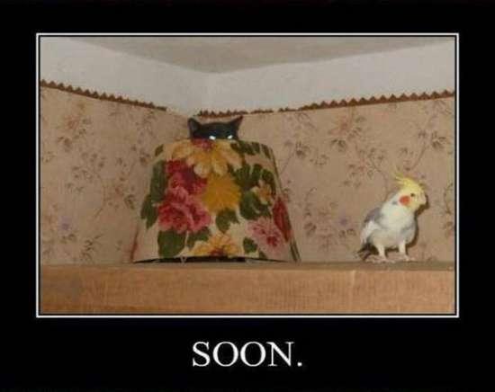 Σύντομα... (6)