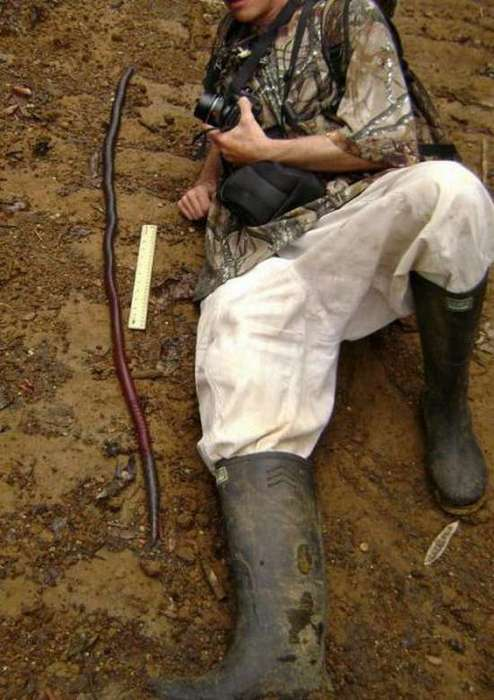 Τεράστια σκουλήκια που φτάνουν τα 3-4 μέτρα (2)