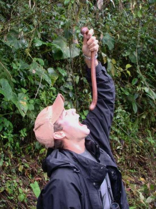 Τεράστια σκουλήκια που φτάνουν τα 3-4 μέτρα (7)