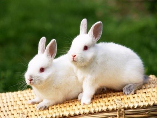 Ζώα αλμπίνοι (7)