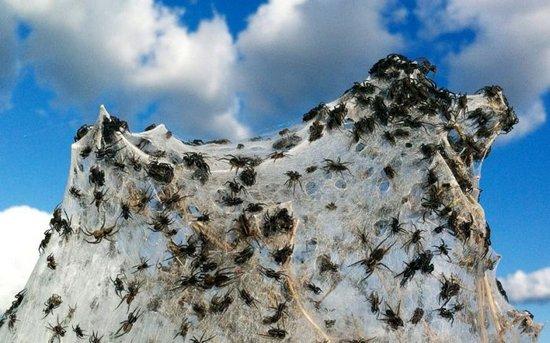 Αράχνες κάλυψαν τα πάντα σε περιοχή της Αυστραλίας (6)