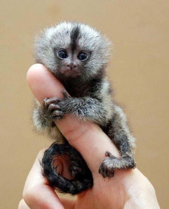 Αξιολάτρευτα μικροσκοπικά ζώα (1)