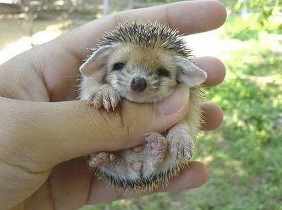 Αξιολάτρευτα μικροσκοπικά ζώα (3)