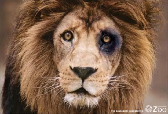 Κορυφαίες διαφημίσεις ζωολογικών κήπων (4)