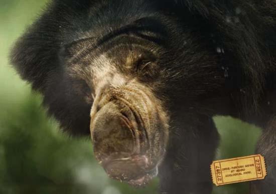 Κορυφαίες διαφημίσεις ζωολογικών κήπων (14)