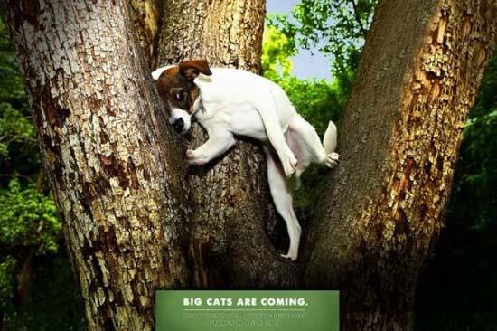 Κορυφαίες διαφημίσεις ζωολογικών κήπων (19)