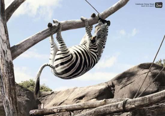 Κορυφαίες διαφημίσεις ζωολογικών κήπων (20)