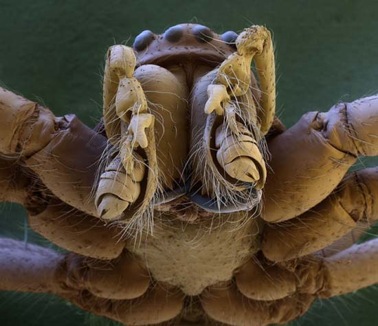 Εκπληκτικές εικόνες από μικροσκόπιο (3)